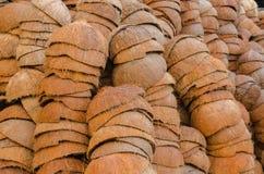 Το κοχύλι καρύδων Στοκ Φωτογραφίες