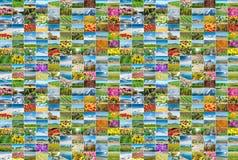 Το κολάζ πολλών φωτογραφιών φύσης Στοκ φωτογραφία με δικαίωμα ελεύθερης χρήσης