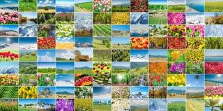 Το κολάζ πολλών φωτογραφιών φύσης Στοκ εικόνα με δικαίωμα ελεύθερης χρήσης