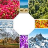 Το κολάζ πολλών φωτογραφιών φύσης Στοκ Φωτογραφίες