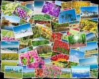 Το κολάζ των διάφορων φωτογραφιών φύσης Στοκ Φωτογραφίες