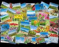 Το κολάζ των διάφορων φωτογραφιών φύσης Στοκ Εικόνες