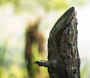 Το κολόβωμα ενός πριονισμένου κορμού δέντρων Στοκ φωτογραφίες με δικαίωμα ελεύθερης χρήσης