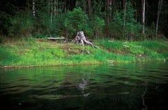 Το κολόβωμα του δέντρου Στοκ Φωτογραφία