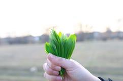 Το κράτημα φρέσκος αντέχει το σκόρδο Στοκ εικόνες με δικαίωμα ελεύθερης χρήσης