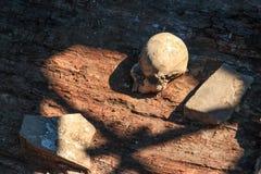 Το κρανίο ενός προσώπου από το έθνος Scythian που βρίσκεται από τους αρχαιολόγους στοκ εικόνες