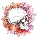 Το κρανίο και τα λουλούδια δίνουν το συρμένο σκίτσο Στοκ Φωτογραφία