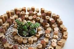 Το κρασί βουλώνει τη σπειροειδή σύνθεση με τα άσπρα φασόλια νεφρών και succulents στοκ εικόνες
