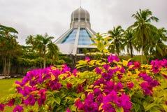 Το κτήριο είναι ένα μουσείο των γατών Κόκκινα ρόδινα λουλούδια Kuching, Μπόρνεο, Sarawak, Μαλαισία Στοκ Φωτογραφίες