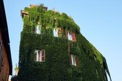Το κτήριο εισβάλλεται με την άμπελο ελαφριά Στοκ φωτογραφίες με δικαίωμα ελεύθερης χρήσης