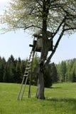Το κυνήγι κατοικεί στο δέντρο των κερασιών την άνοιξη Στοκ Εικόνες