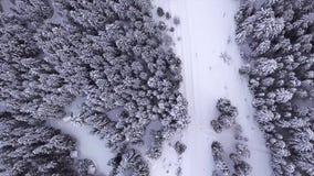Το κωνοφόρο δάσος, ο δρόμος σκορπίζεται με το χιόνι και στέκεται τα αυτοκίνητα επάνω από την όψη εναέρια όψη απόθεμα βίντεο