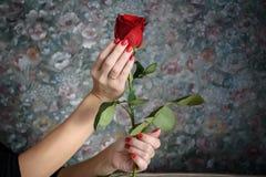 Το κόκκινο αυξήθηκε στο θηλυκό χέρι Στοκ Εικόνα