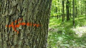 το κόκκινο βέλος στο δέντρο Στοκ φωτογραφίες με δικαίωμα ελεύθερης χρήσης