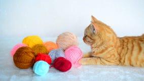 Το κόκκινο γατάκι βρίσκεται κοντά στο χρωματισμένο νήμα για το πλέξιμο απόθεμα βίντεο