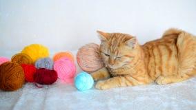 Το κόκκινο γατάκι βρίσκεται κοντά στο χρωματισμένο νήμα για το πλέξιμο φιλμ μικρού μήκους