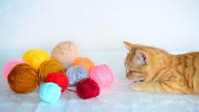 Το κόκκινο γατάκι ροκανίζει το νήμα για το πλέξιμο απόθεμα βίντεο