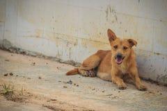 Το κόκκινο εγκαταλειμμένο άστεγο περιπλανώμενο σκυλί βρίσκεται στην οδό ελάχιστα στοκ εικόνες