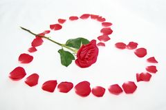 το κόκκινο καρδιών αυξήθη&k Στοκ εικόνα με δικαίωμα ελεύθερης χρήσης