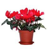 Το κόκκινο καφετί flowerpot στοκ φωτογραφίες
