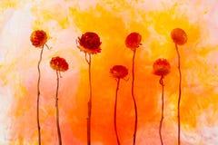 Το κόκκινο λευκό υποβάθρου νερού λουλουδιών μέσα κάτω από το ακρυλικό φθινόπωρο ραβδώσεων καπνού χρωμάτων ανθίζει το πορτοκαλί ap απεικόνιση αποθεμάτων