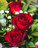 το κόκκινο λουλουδιών &a σημάδι αγάπης Λουλούδι θερινών κήπων Στοκ Εικόνα
