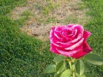 το κόκκινο λουλουδιών &a Στοκ εικόνα με δικαίωμα ελεύθερης χρήσης