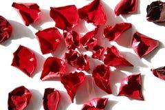 το κόκκινο πετάλων αυξήθη& Στοκ εικόνα με δικαίωμα ελεύθερης χρήσης