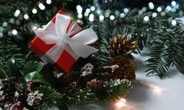 Το κόκκινο πολυτελές δώρο Χριστουγέννων στους κλάδους δέντρων πεύκων Στοκ Φωτογραφία