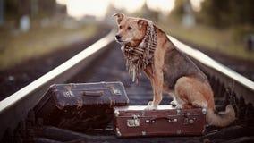 Το κόκκινο σκυλί κάθεται σε μια βαλίτσα στις ράγες Στοκ εικόνες με δικαίωμα ελεύθερης χρήσης