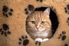 το κόκκινο σπιτιών γατών κάθεται μικρό στοκ εικόνες με δικαίωμα ελεύθερης χρήσης