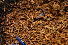 Το κόκκινο τσάι βγάζει φύλλα Τσάι Redbush Στοκ εικόνες με δικαίωμα ελεύθερης χρήσης
