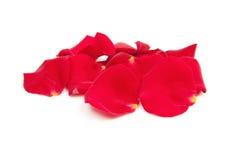 το κόκκινο φύλλων αυξήθη&kappa Στοκ φωτογραφίες με δικαίωμα ελεύθερης χρήσης