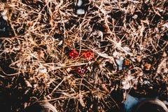 Το κόκκινο χωρίζει σε τετράγωνα στη χλόη Στοκ Φωτογραφίες