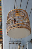 Το κόκκινο bulbul το πουλί στο μοναδικό κλασικό κλουβί Στοκ φωτογραφία με δικαίωμα ελεύθερης χρήσης