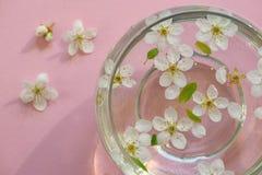 το κύπελλο χρωματίζει κάτω από τονισμένο το λουλούδια ύδωρ Στοκ εικόνες με δικαίωμα ελεύθερης χρήσης