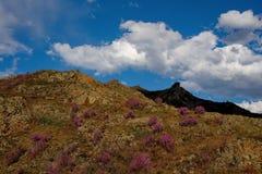 Το κύριο φεστιβάλ άνοιξη στα βουνά Altai Στοκ Φωτογραφίες
