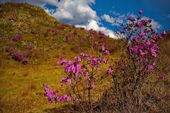 Το κύριο φεστιβάλ άνοιξη στα βουνά Altai Στοκ Φωτογραφία