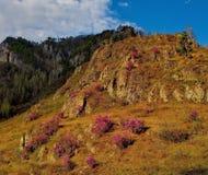 Το κύριο φεστιβάλ άνοιξη στα βουνά Altai Στοκ Εικόνες