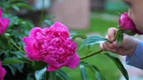 Το λίγο χαριτωμένο μωρό απολαμβάνει ήπια τη μυρωδιά των λουλουδιών Το παιδί παίρνει ένα λουλούδι και εισπνέει το άρωμά του ανθίζο φιλμ μικρού μήκους