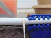 Το λίγο ladybug στην πόλη Στοκ Εικόνες