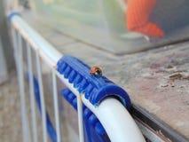Το λίγο ladybug στην πόλη Στοκ Φωτογραφίες