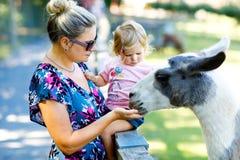 Το λατρευτό χαριτωμένο κορίτσι μικρών παιδιών και ο νέος ταΐζοντας λάμα μητέρων παιδιά καλλιεργούν Όμορφα petting ζώα παιδιών μωρ στοκ φωτογραφία με δικαίωμα ελεύθερης χρήσης