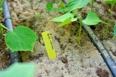 Το λαχανικό ετικεττών ονόματος για αυξάνεται στοκ φωτογραφία με δικαίωμα ελεύθερης χρήσης