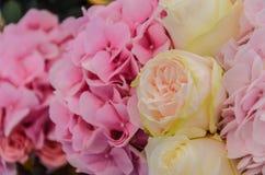 Το λεπτό υπόβαθρο του hydrangea λουλουδιών και αυξήθηκε κινηματογράφηση σε πρώτο πλάνο Στοκ Εικόνες