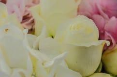 Το λεπτό υπόβαθρο του hydrangea λουλουδιών και αυξήθηκε κινηματογράφηση σε πρώτο πλάνο Στοκ φωτογραφία με δικαίωμα ελεύθερης χρήσης