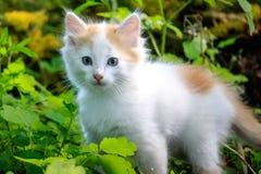 Το λευκό γατακιών κοιτάζει δεξιά Στοκ φωτογραφίες με δικαίωμα ελεύθερης χρήσης