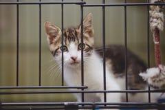 Το λευκό γατακιών με τα ριγωτά σημεία κάθεται σε ένα κλουβί Στοκ φωτογραφίες με δικαίωμα ελεύθερης χρήσης