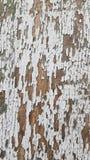 Το λευκό χρωμάτισε τη στενοχωρημένη ραγισμένη ξύλινη σύσταση σανίδων στοκ εικόνες