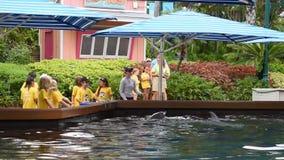Το λεωφορείο δίνει τα ψάρια στα δελφίνια και έπειτα καταβρέχουν τα παιδιά σε Seaworld απόθεμα βίντεο